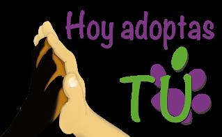 http://www.perroton.org/#!hoy-adoptas-t/c11rd